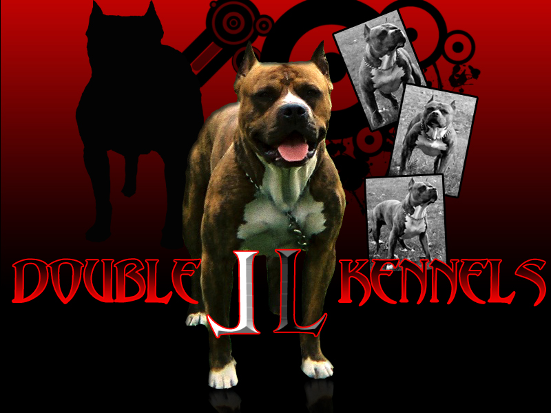 Bull Tattoo Designs Our mission is to produce American Pit Bull Terriers